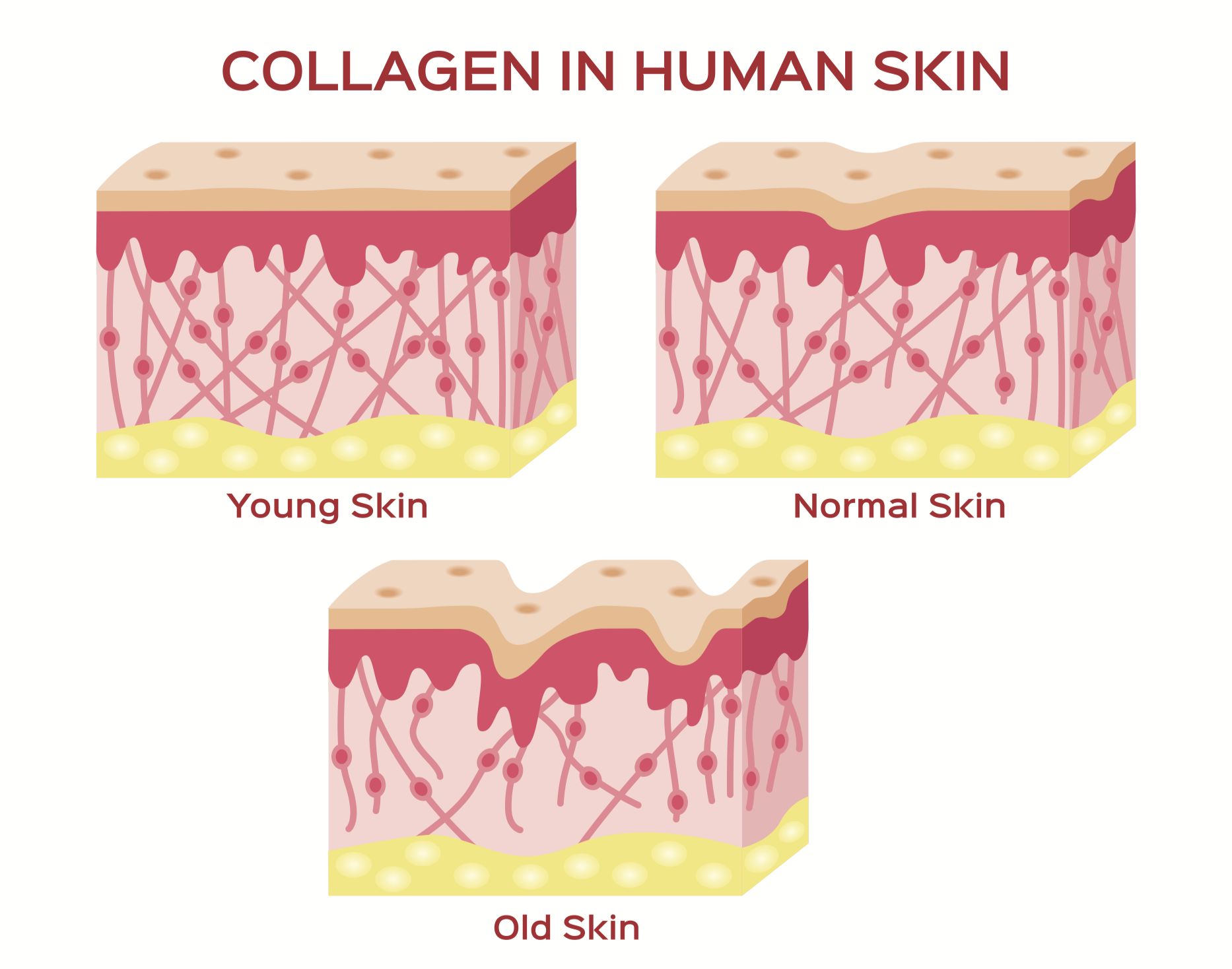 All About Collagen Supplements The Dermatology Review,White Kitchen Cupboards With Stainless Steel Appliances